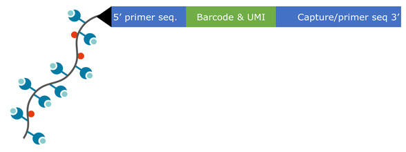 IMX_dextramer_service_2.jpg