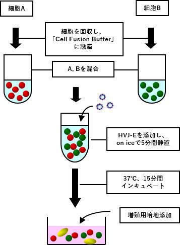 ISK_CF001_7.jpg