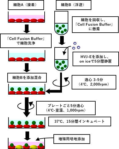 ISK_CF001_8.jpg