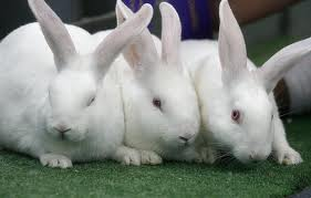 KFB_products_rabbit.JPG