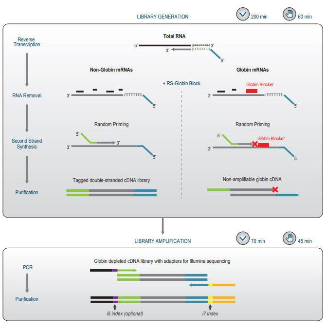 QuantSeqライブラリ調製のワークフロー