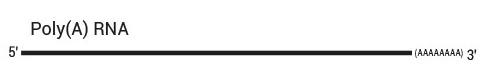 QuantSeq 3' mRNA-Seq Library Prep Kit ワークフロー1