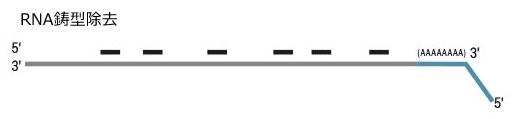 QuantSeq 3' mRNA-Seq Library Prep Kit ワークフロー3