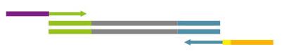 QuantSeq 3' mRNA-Seq Library Prep Kit ワークフロー6