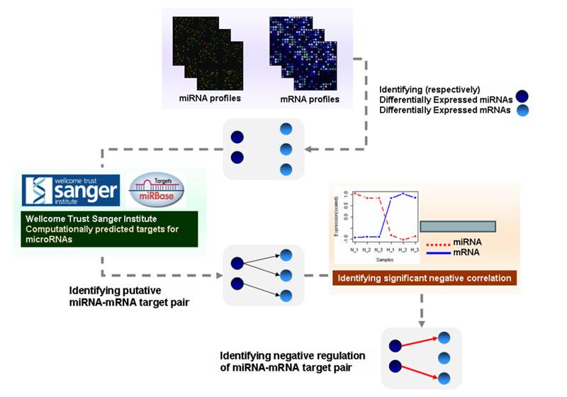 MAG_Microarray_Gene_Expression_3.jpg
