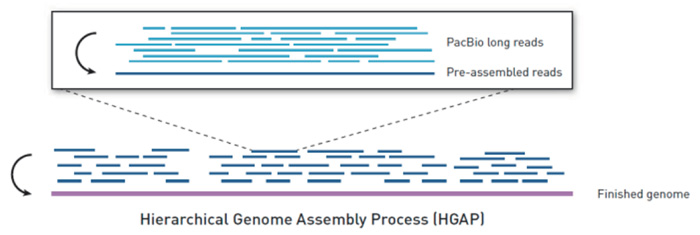 Hierarchical Genome Assembly Process [HGAP]