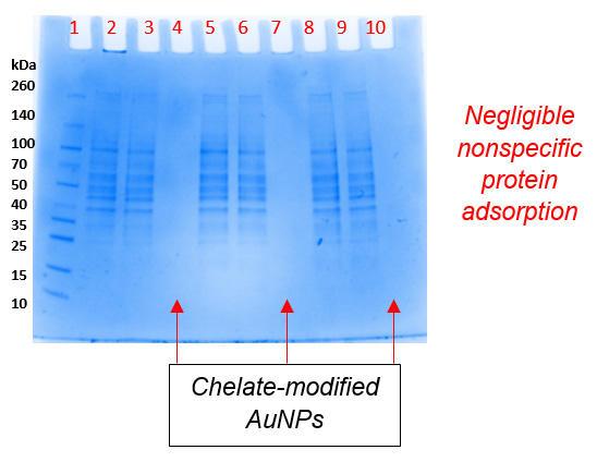 キットの非特異的タンパク質吸着の評価