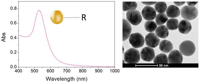 キレート修飾LinkOriented 金ナノ粒子のUV-Vis吸収スペクトルおよびTEM観察像