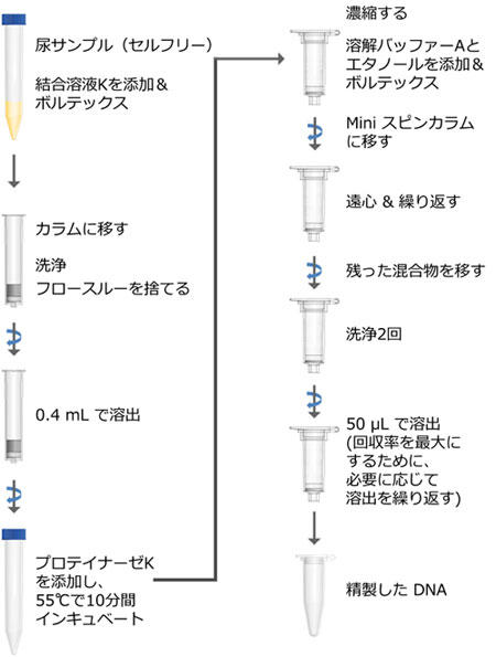 Urine Cell-Free Circulating DNA Purification Midi Kit プロトコール