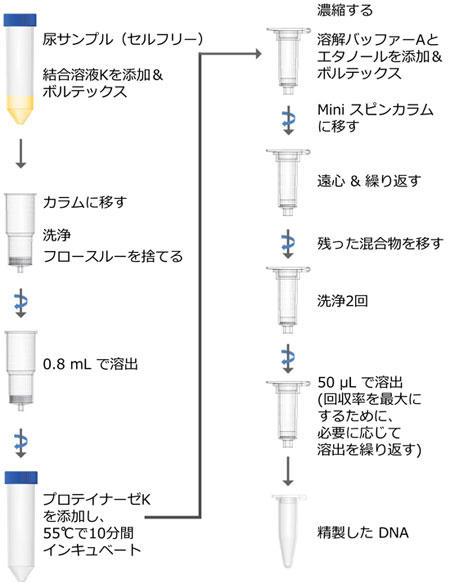 Urine Cell-Free Circulating DNA Purification Maxi Kit プロトコール