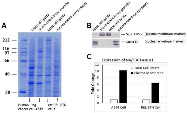 細胞膜タンパク質抽出キット