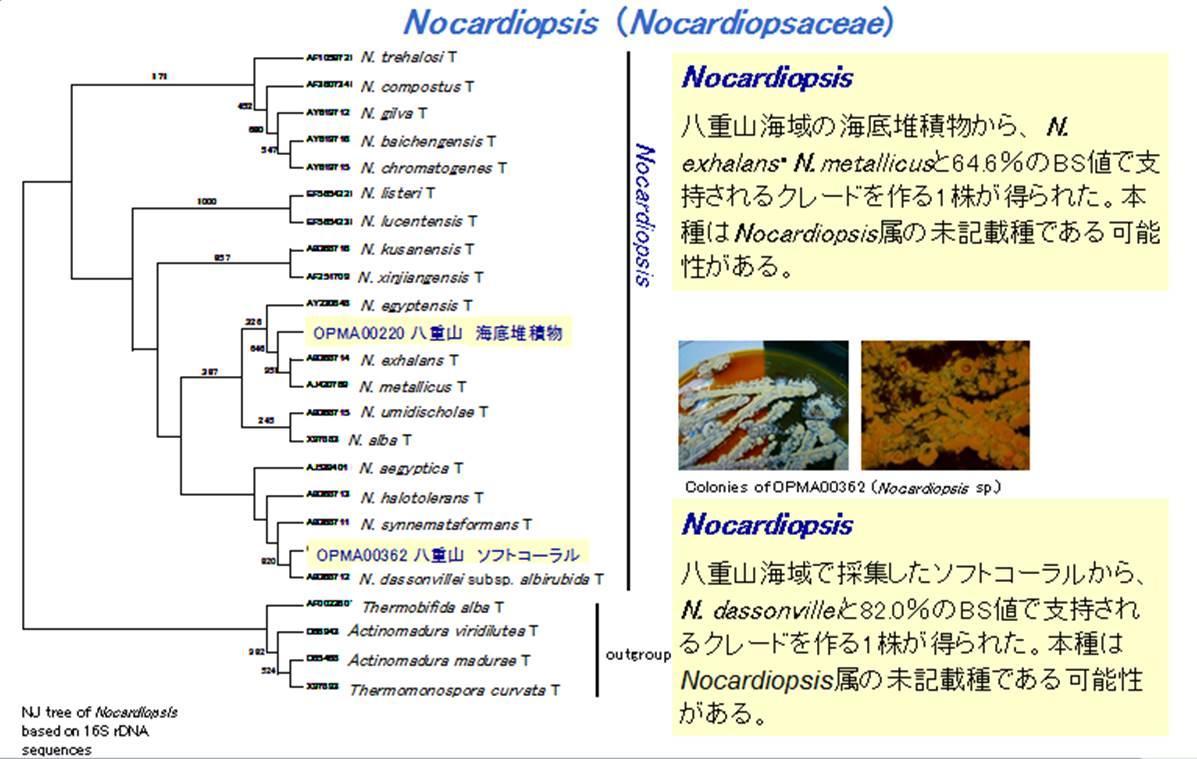 微生物・微細藻類の同定