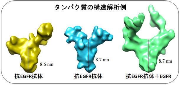 EGFR複合体の構造解析