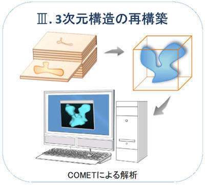III. 3次元構造の再構築