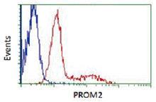 myc-DDKタグ付PROM2 ORF過剰発現プラスミド(赤)または空のコントロールベクター(青)のいずれかを導入した。