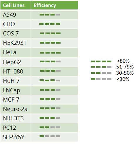 各細胞株のトランスフェクション効率