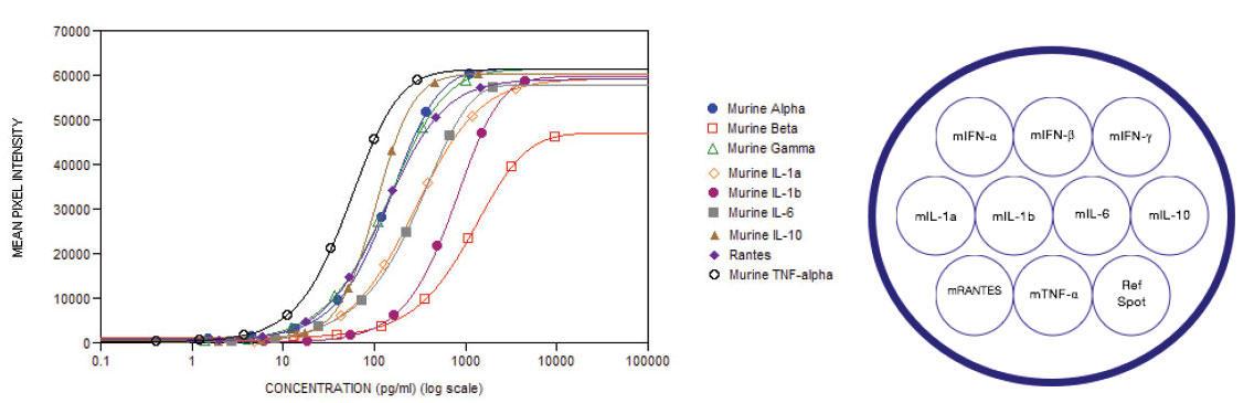 典型的な分析物検量線と各ウェルにおけるスポットの位置