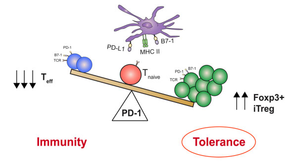 PD1_PDL1_antibody_WLS.jpg