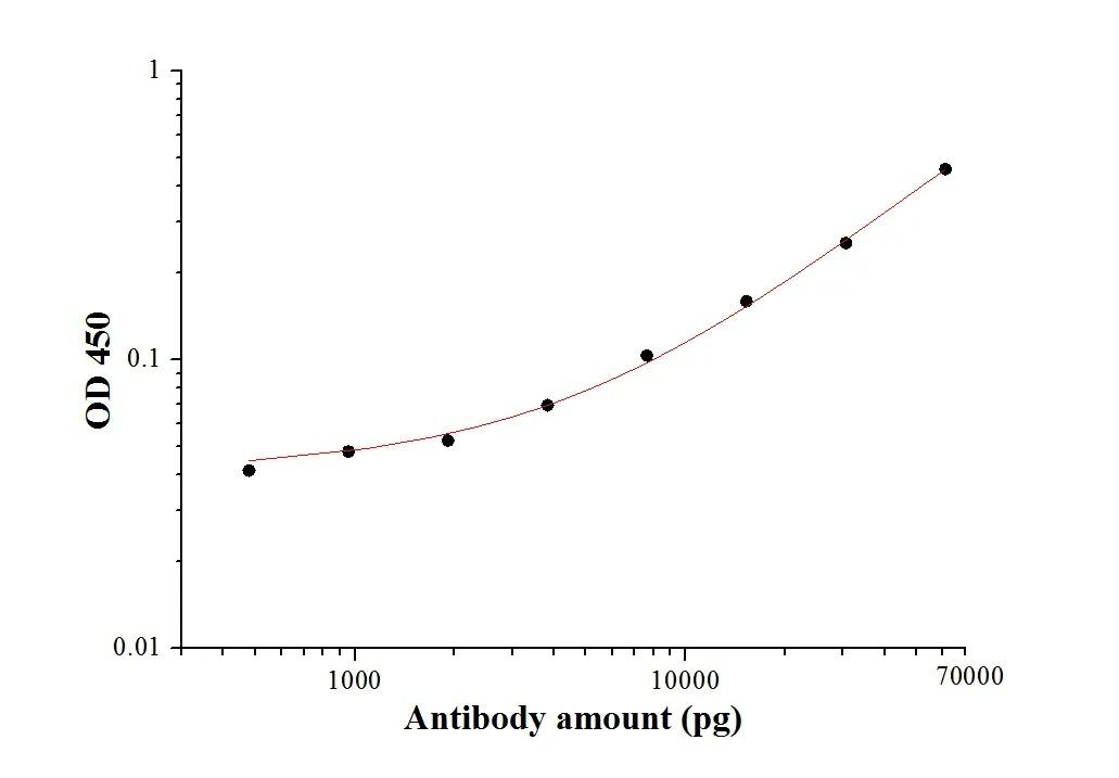 SARS-CoV-2 Membrane Glycoprotein Antibody (28882-1-AP) tested by ELISA.SARS-CoV-2 Membrane Glycoprotein was coated onto microtiter plates at 0.15 ?g/well and then incubated with a dilution series of SARS-CoV-2 Membrane Glycoprotein Antibody (28882-1-AP). Bound antibodies were detected with HRP conjugated anti-Rabbit IgG followed by incubation with HRP Substrate and then measuring the resulting absorbance at 450 nm.