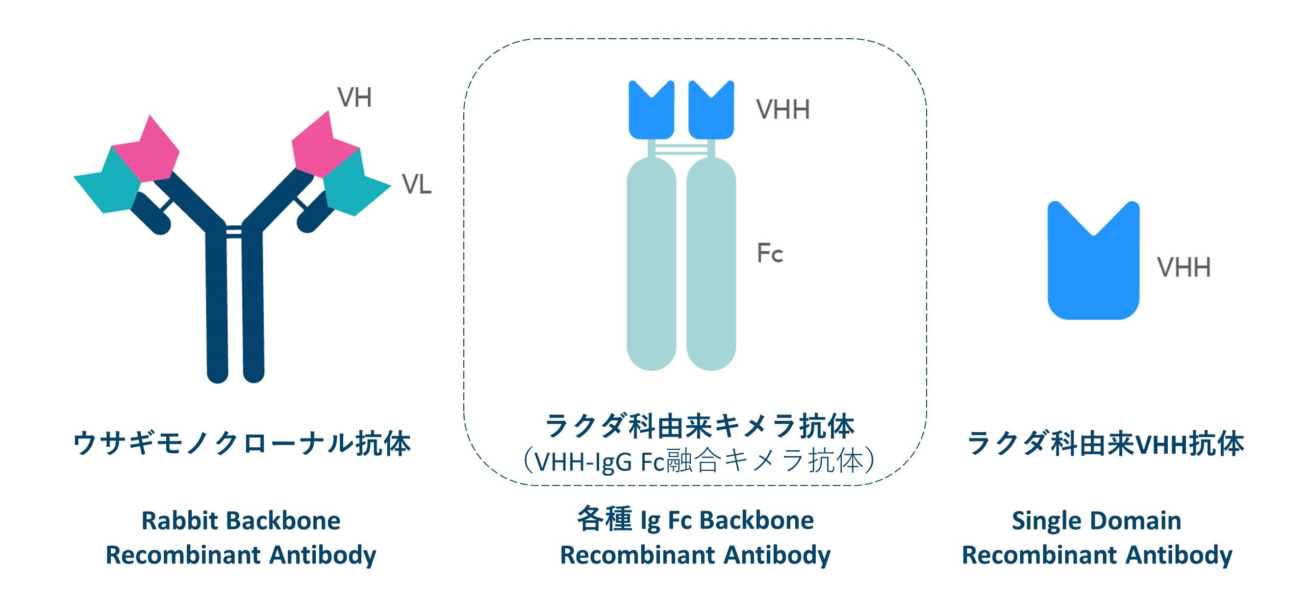 図. Ig Fc融合キメラ抗体を含むリコンビナント抗体の種類