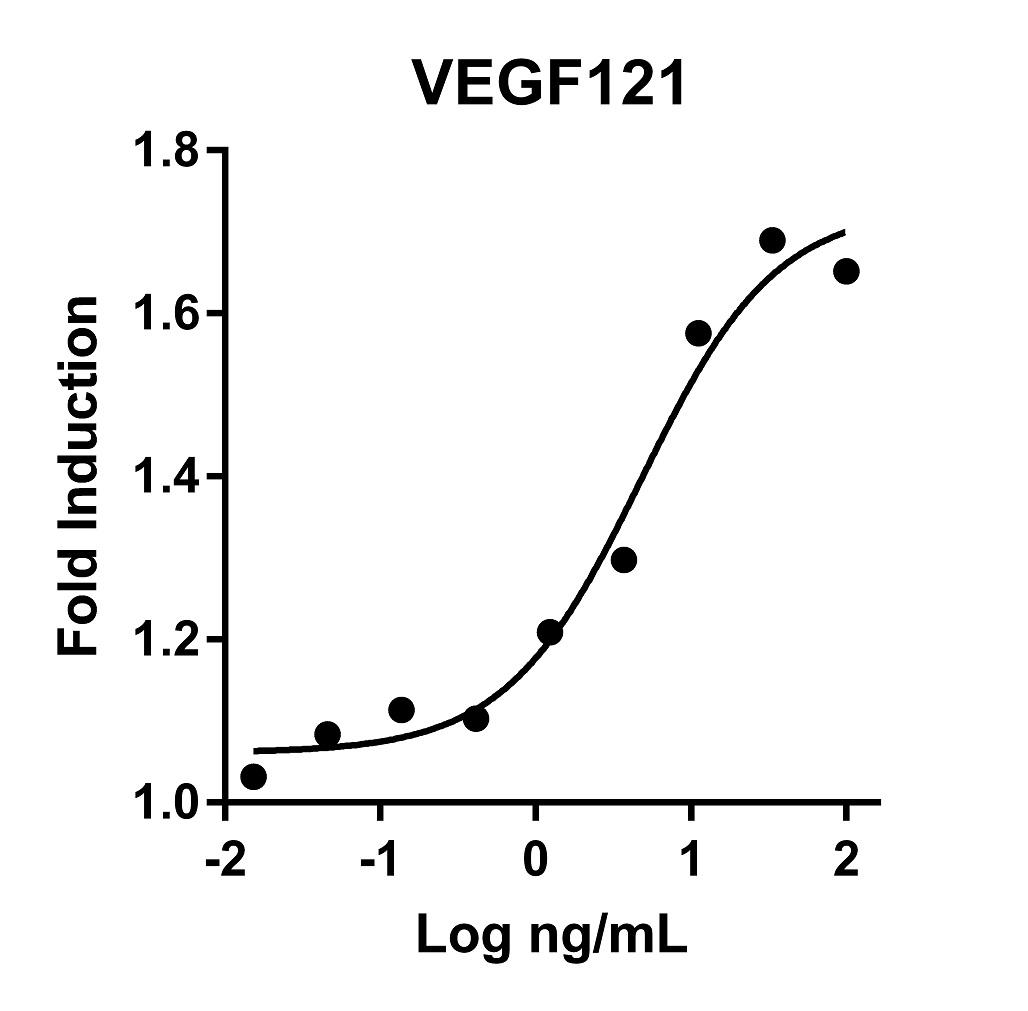 The activity was determined by the dose-dependent stimulation of the proliferation of HUVEC cells (Human Umbilical Vein Endothelial Cells) using Promega CellTiter96® Aqueous Non-Radioactive Cell Proliferation Assay.