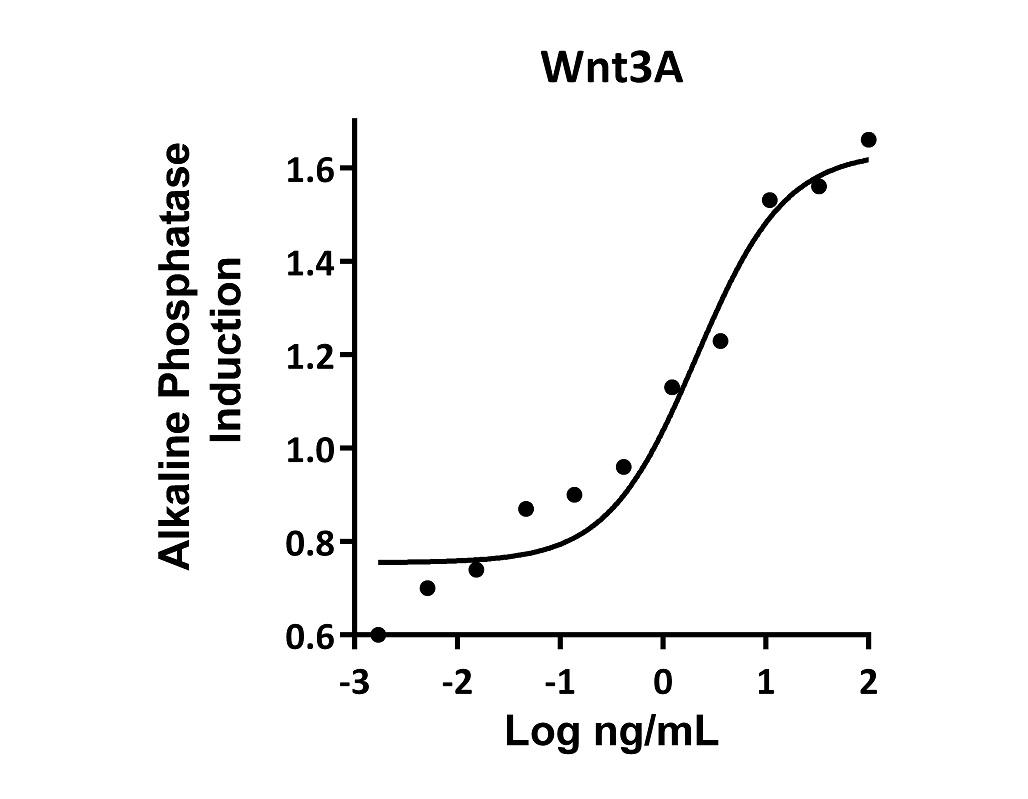 The activity was determined by dose-dependent Alkaline Phosphatase production in MC3T3 E1 mouse preosteoblast cells using pNPP as chromogenic substrate and stabilization of beta catenin in mouse L929 cells