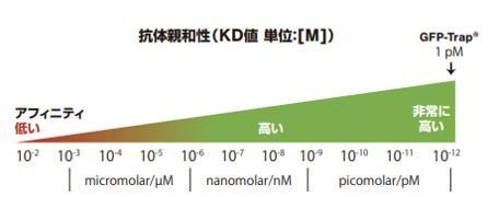 図. 抗GFP抗体(アルパカ由来VHH抗体)の解離定数(KD)[Molar]