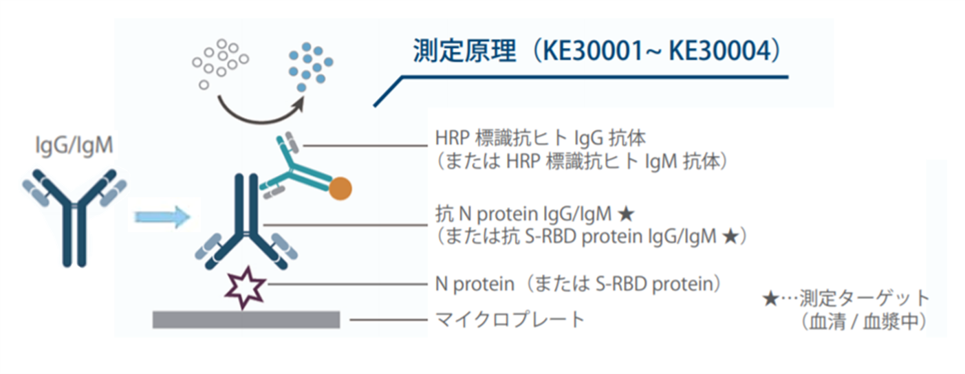 図2. 間接ELISAキット(測定対象:IgG抗体またはIgM抗体)の測定原理