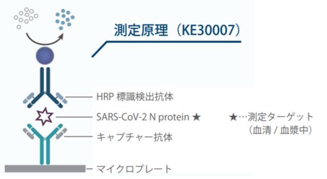 図4. サンドイッチELISAキット(測定対象:SARS-CoV-2 抗原)の測定原理
