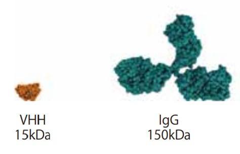 図2. 従来の1/10ほどの分子量