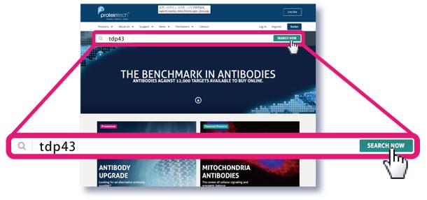 プロテインテック社ウェブサイトにアクセス