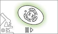 Chromobody