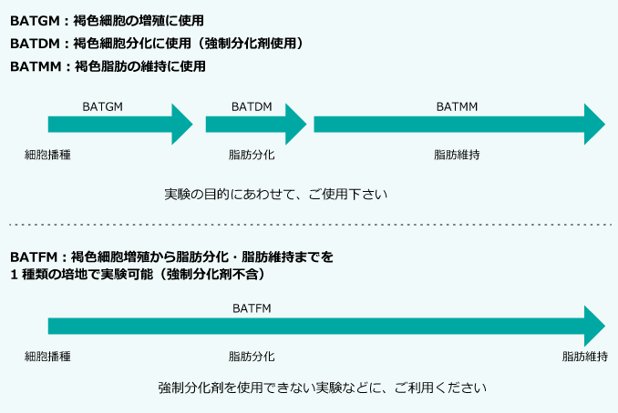 PMC_BAT10_2.png