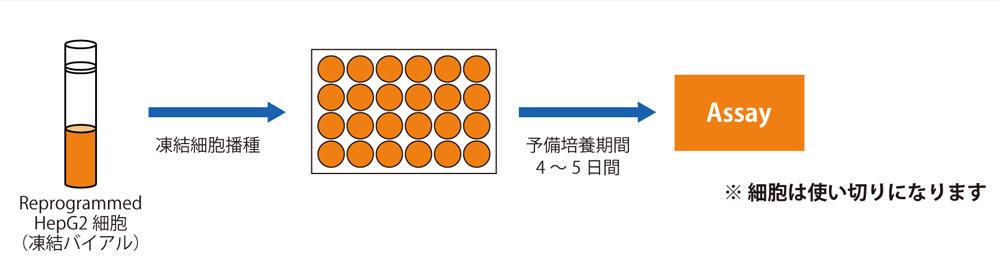 PMC_RHEPG2C_3.jpg