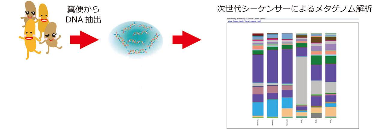 糞便からのゲノムDNA抽出から菌叢解析
