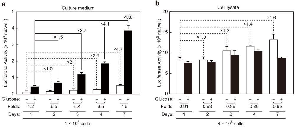 ルミノメーターを用いたiGL細胞の分泌インスリン測定