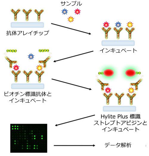 抗体アレイ「G-シリーズ」の原理およびワークフロー