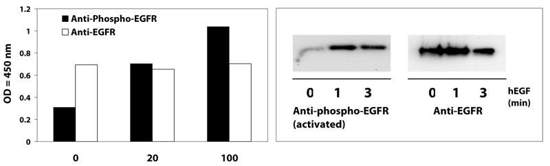 リン酸化タンパク質セルベース ELISA キット使用例