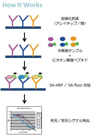抗体アレイ「E-シリーズ」測定原理