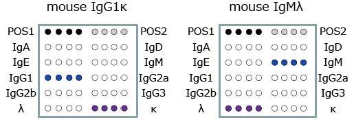 マウスモノクローナル抗体のアイソタイピング