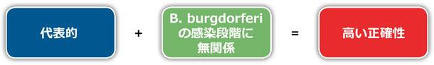 B. burgdorferi 遺伝子の E. coli 発現ベクターへのクローニング