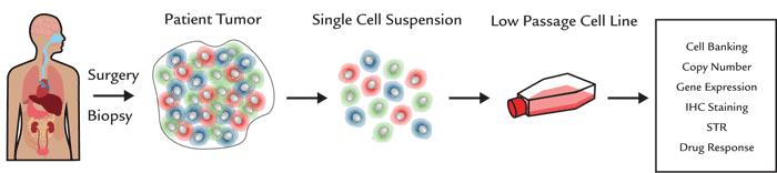 メラノーマ細胞株の作製方法