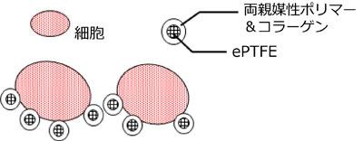 多孔質膜の構造と特長
