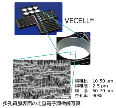 VECELL® 多孔質膜表面の走査電子顕微鏡写真