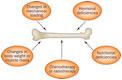 YSL_Bone_Disease_Metabolism_1.jpg