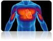 YSL_Cardiovascular_Disease_1.jpg