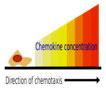 YSL_Chemokines_1.jpg