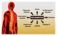 YSL_Inflammation_1.jpg