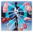 YSL_Transplantation_1.jpg