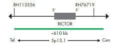 SPEC RICTOR プローブのマップ